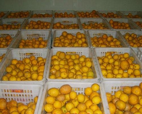 貴州水果保鮮冷庫